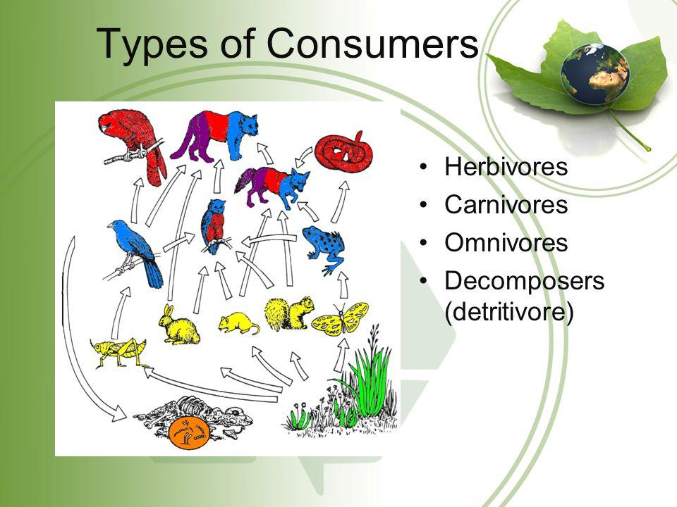 Types of Consumers Herbivores Carnivores Omnivores