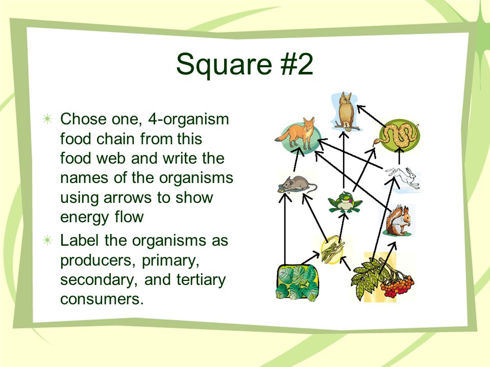 Square #2 Chose one, 4-organism food chain from this food web and write the names of the organisms using arrows to show energy flow.