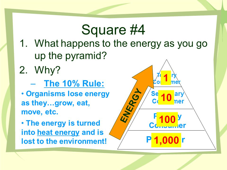 Square #4 What happens to the energy as you go up the pyramid Why 1