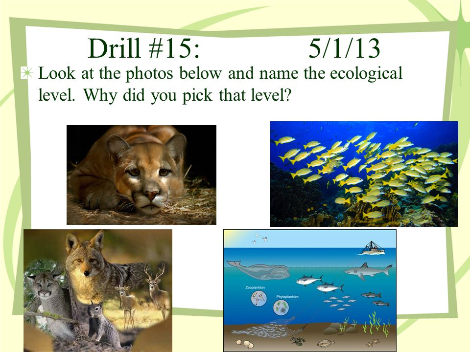 Drill #15: 5/1/13 Look at the photos below and name the ecological level.