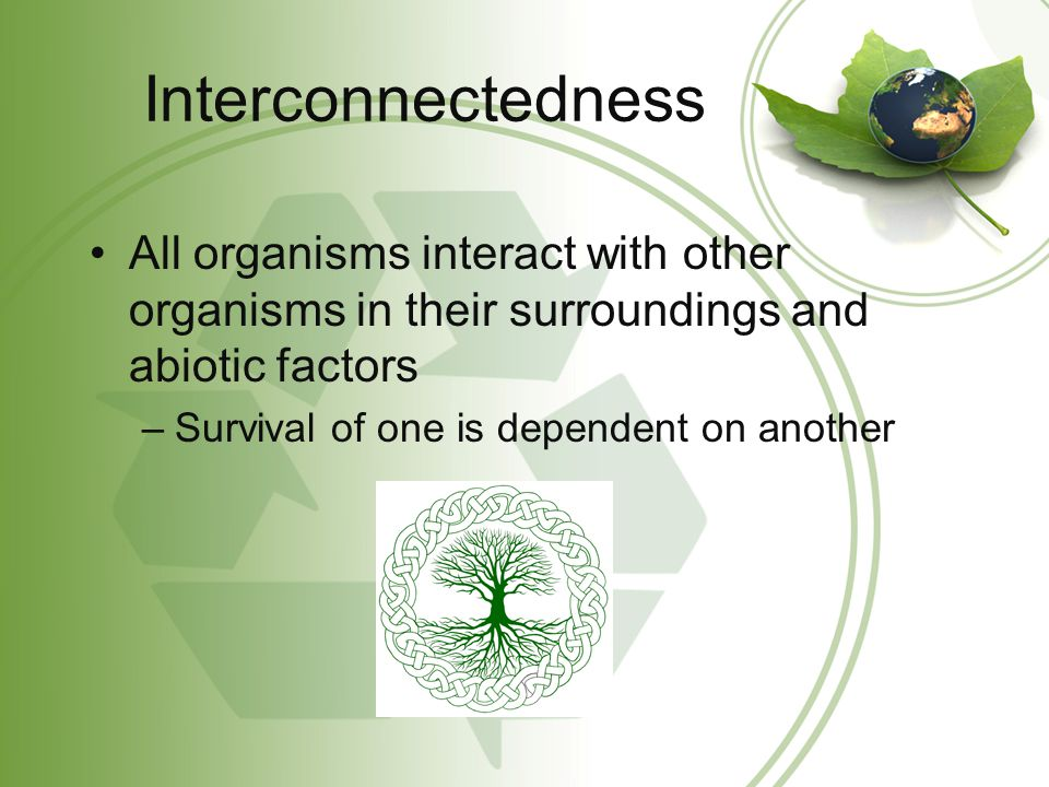 Interconnectedness All organisms interact with other organisms in their surroundings and abiotic factors.