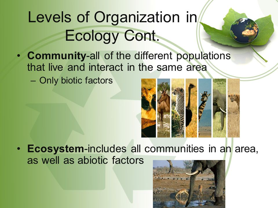 Levels of Organization in Ecology Cont.