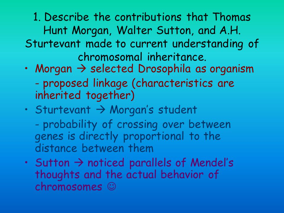1. Describe the contributions that Thomas Hunt Morgan, Walter Sutton, and A.H. Sturtevant made to current understanding of chromosomal inheritance.