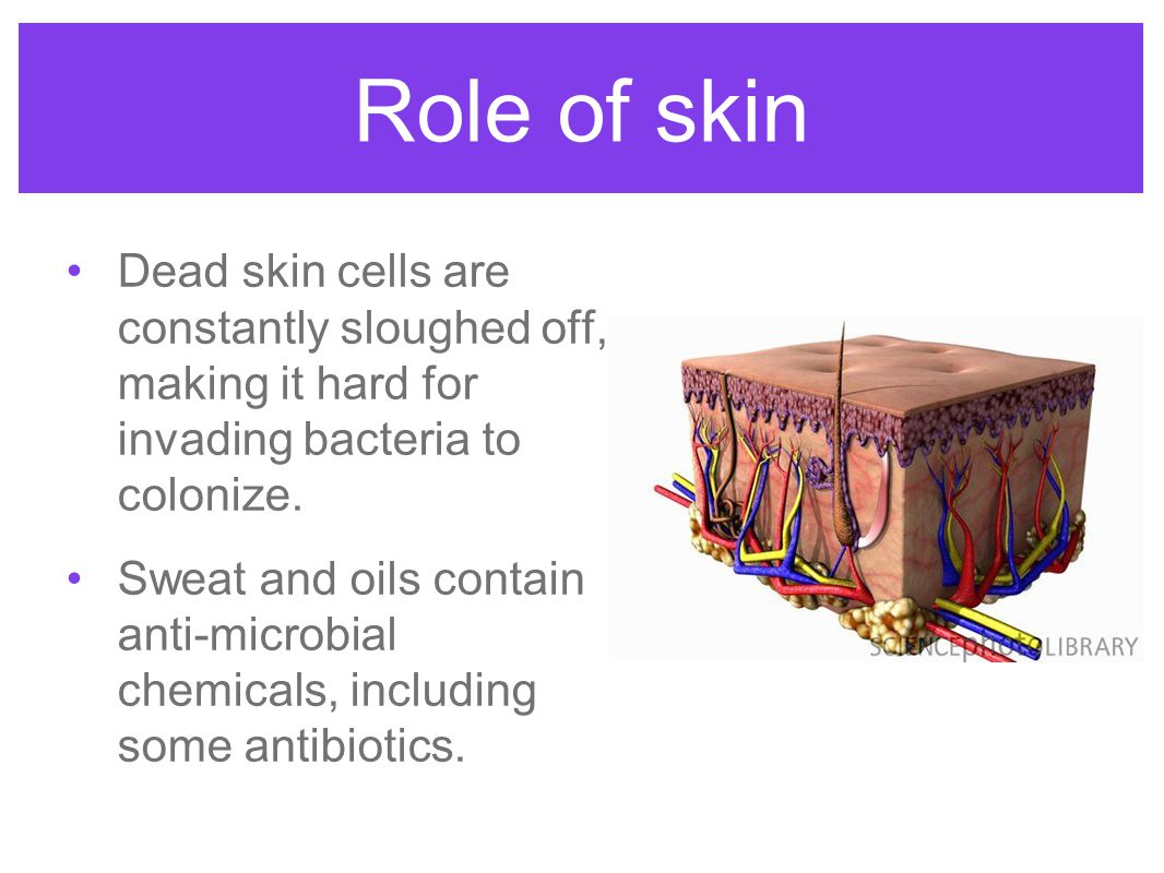 Role of skin Dead skin cells are constantly sloughed off, making it hard for invading bacteria to colonize.