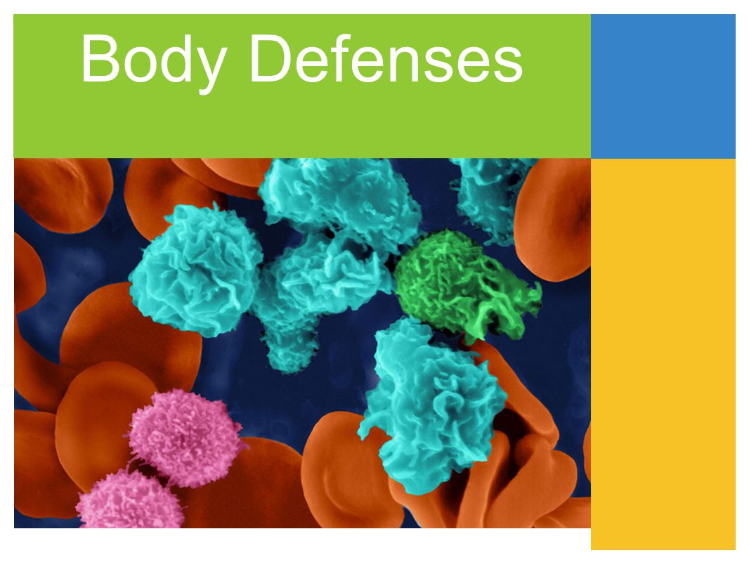 Body Defenses