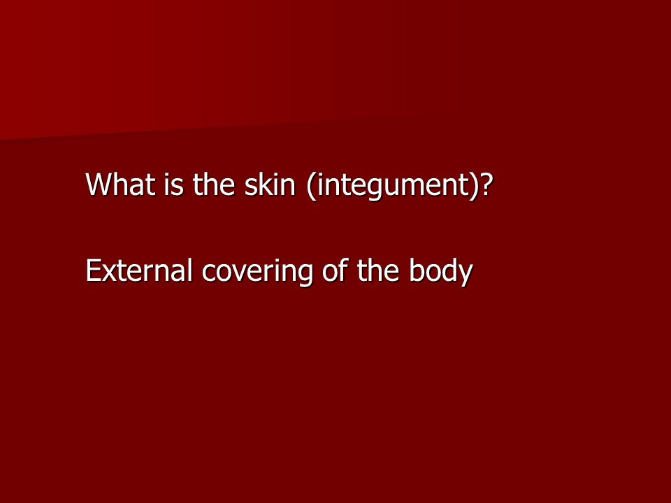 What is the skin (integument)