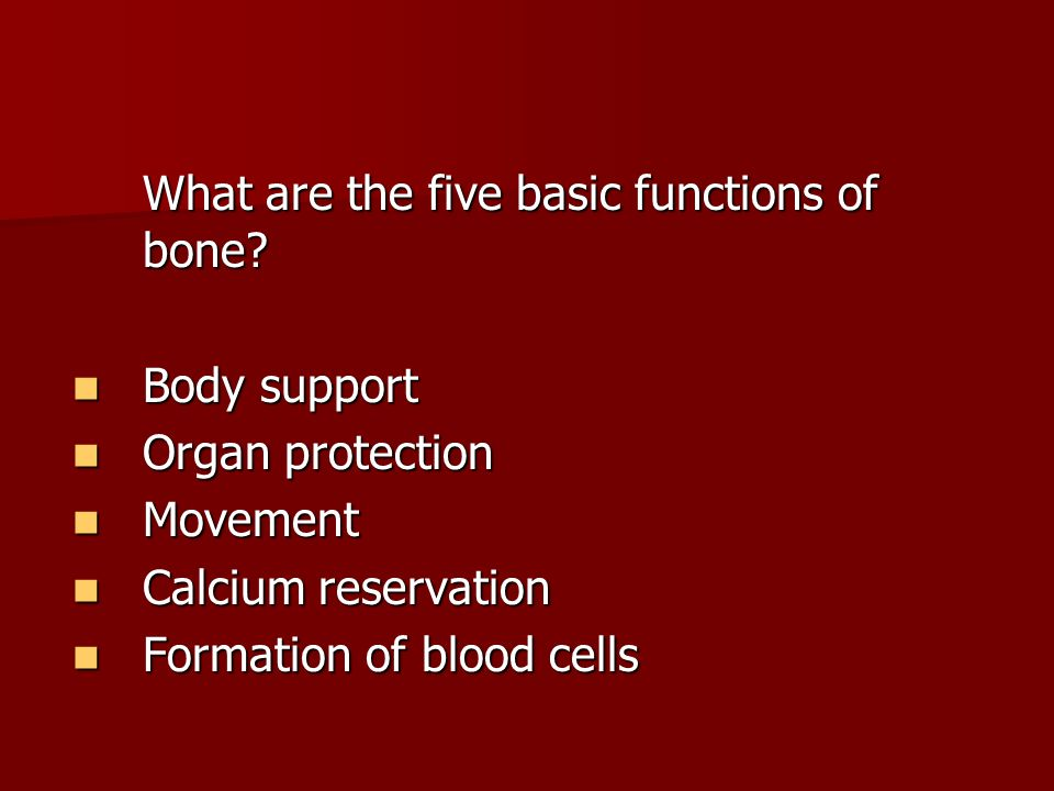 What are the five basic functions of bone