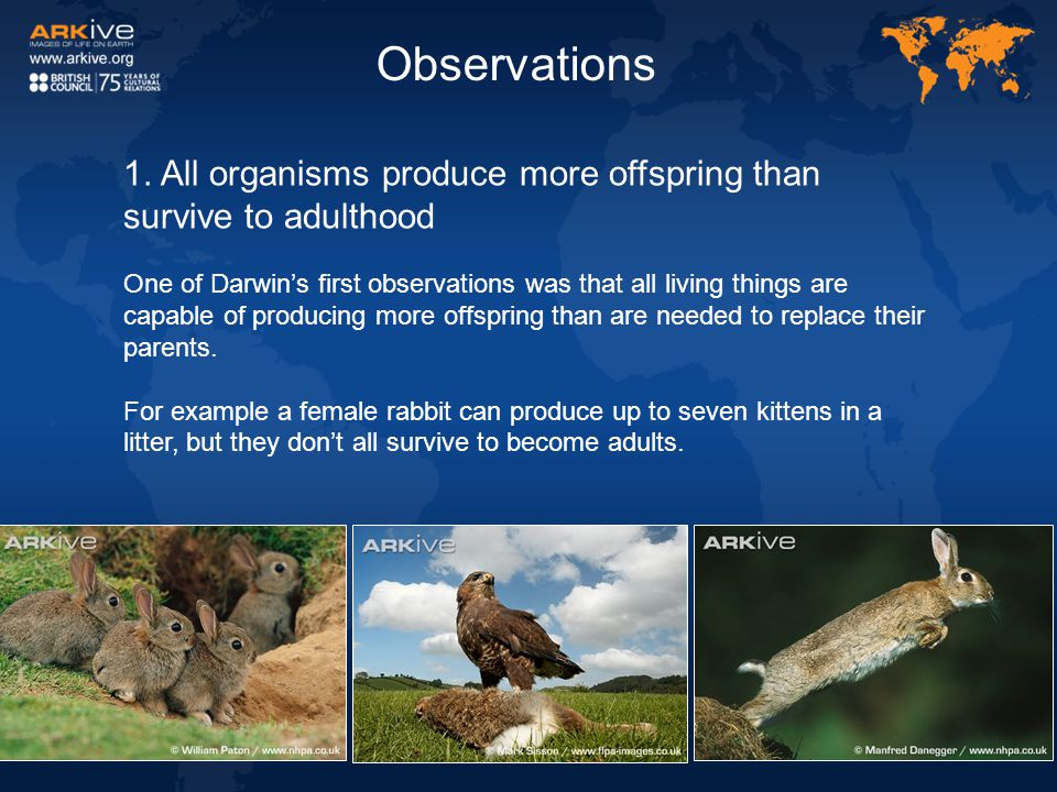 Observations 1. All organisms produce more offspring than survive to adulthood.