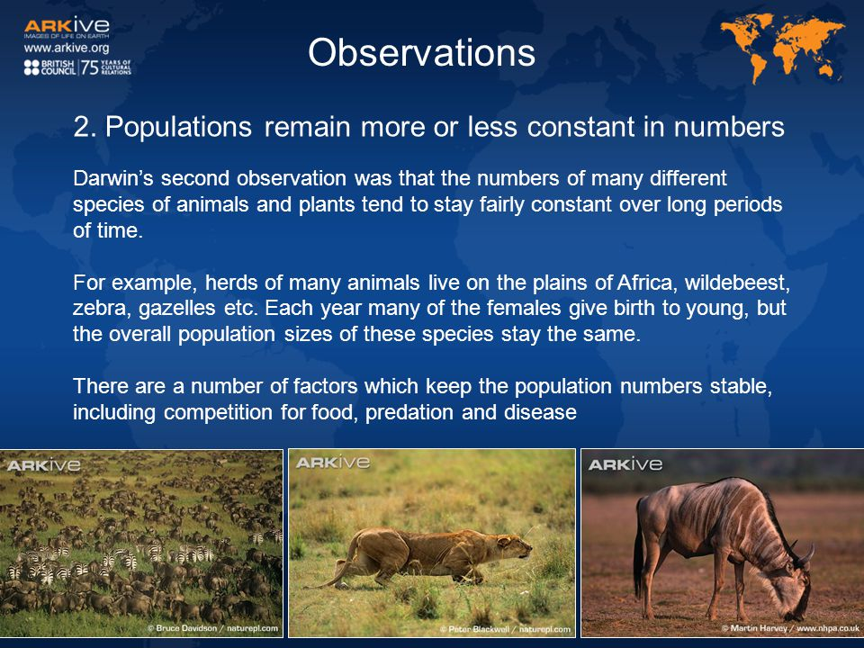 Observations 2. Populations remain more or less constant in numbers