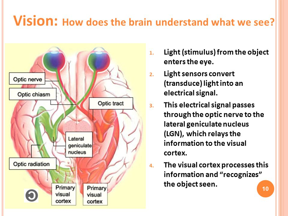 Vision: How does the brain understand what we see