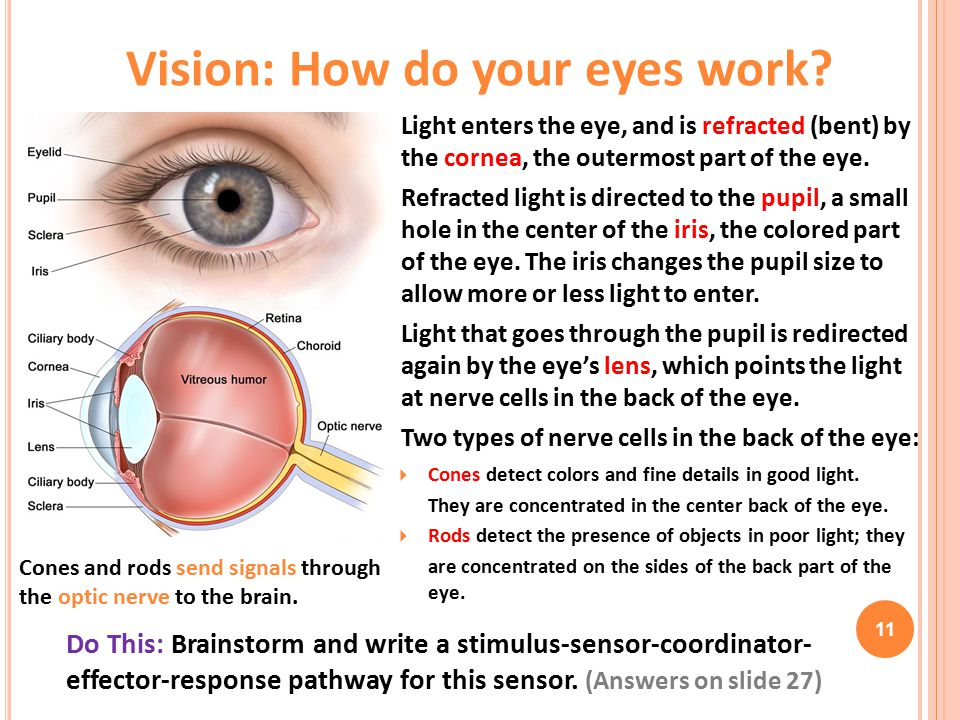 Vision: How do your eyes work