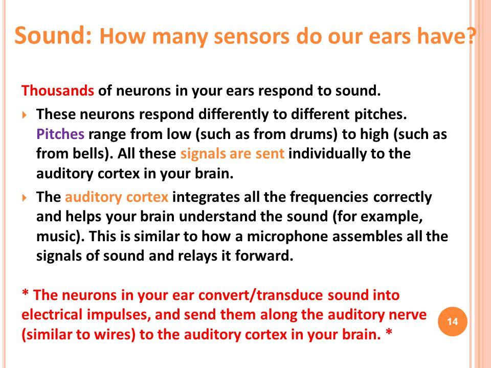 Sound: How many sensors do our ears have