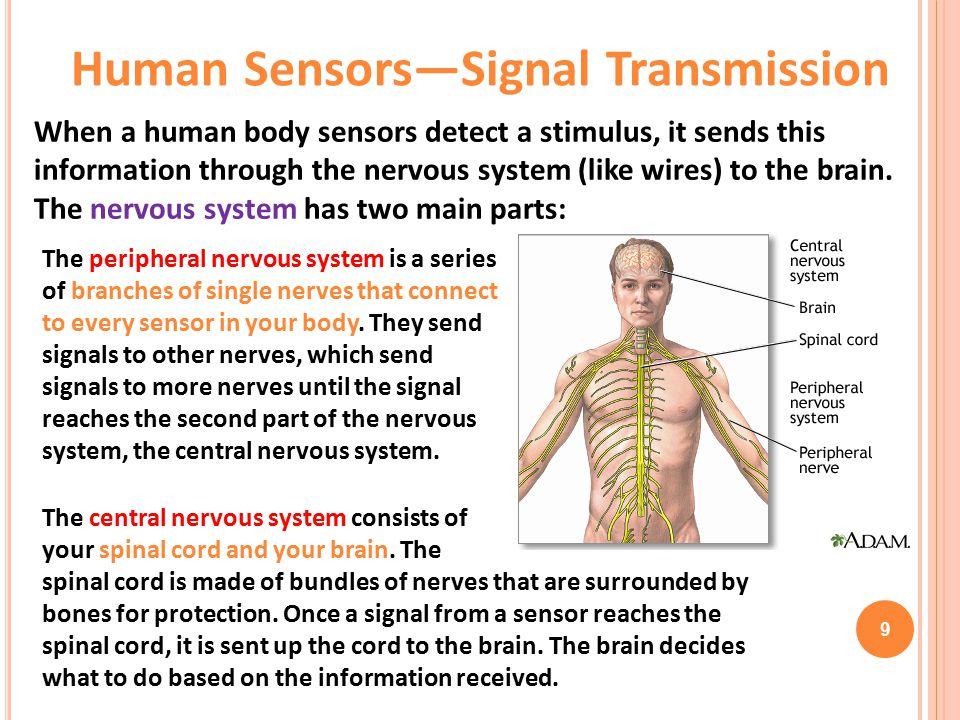 Human Sensors—Signal Transmission