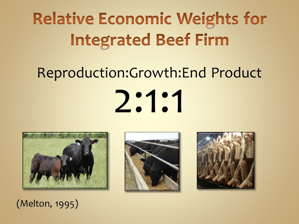 Relative Economic Weights for Integrated Beef Firm