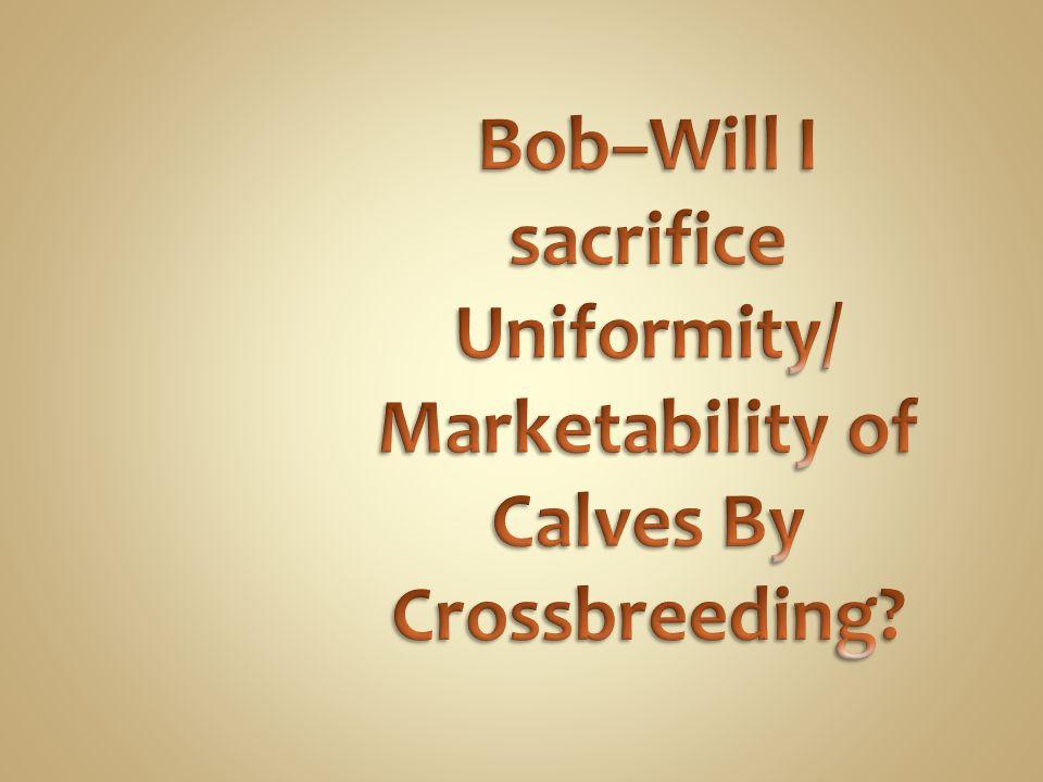 Bob–Will I sacrifice Uniformity/ Marketability of Calves By Crossbreeding