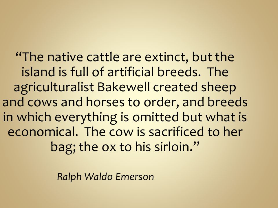 The native cattle are extinct, but the island is full of artificial breeds. The agriculturalist Bakewell created sheep and cows and horses to order, and breeds in which everything is omitted but what is economical. The cow is sacrificed to her bag; the ox to his sirloin.