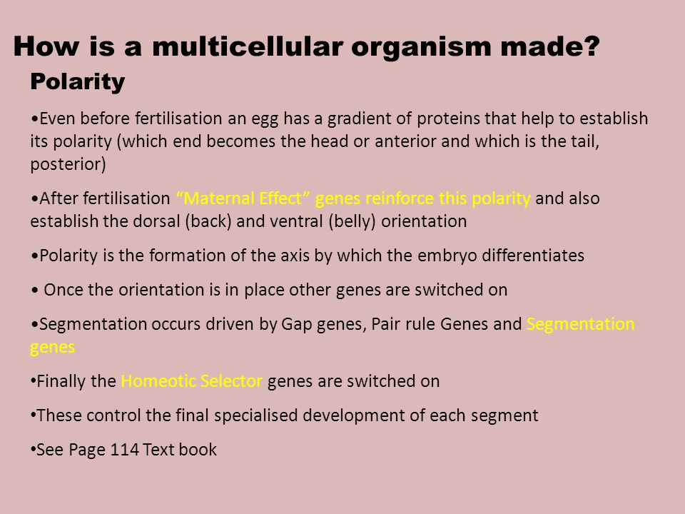 How is a multicellular organism made