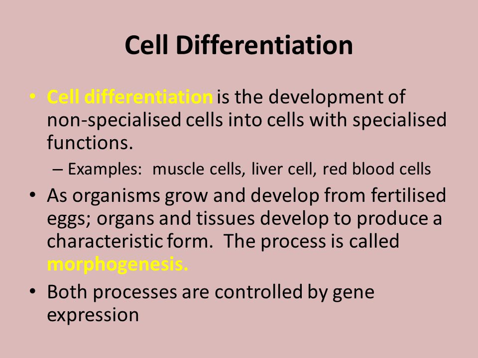 Cell Differentiation Cell differentiation is the development of non-specialised cells into cells with specialised functions.