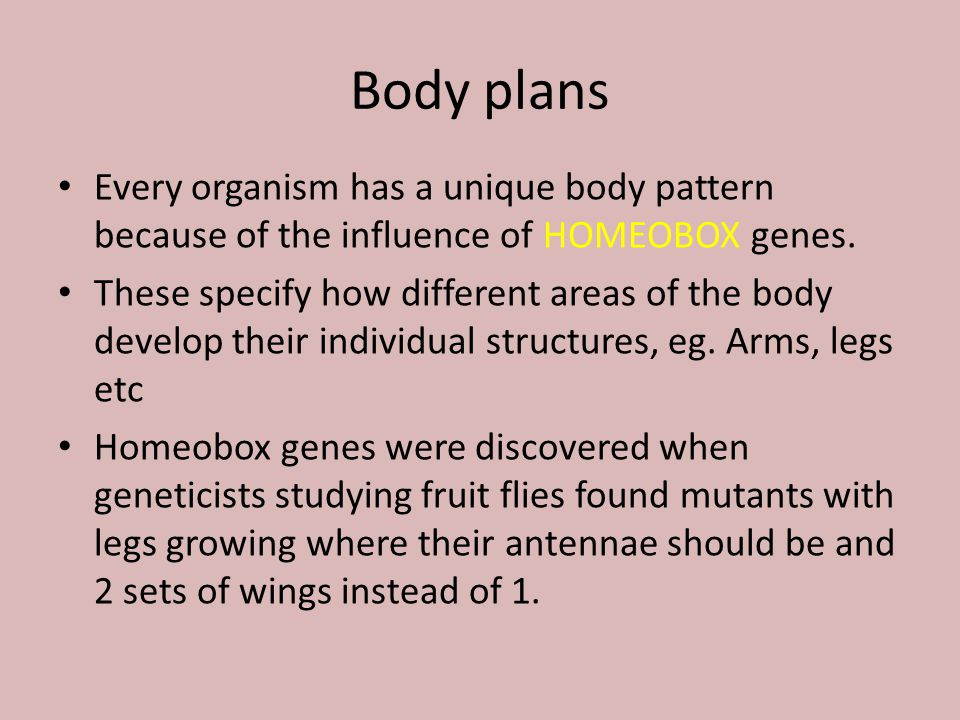Body plans Every organism has a unique body pattern because of the influence of HOMEOBOX genes.