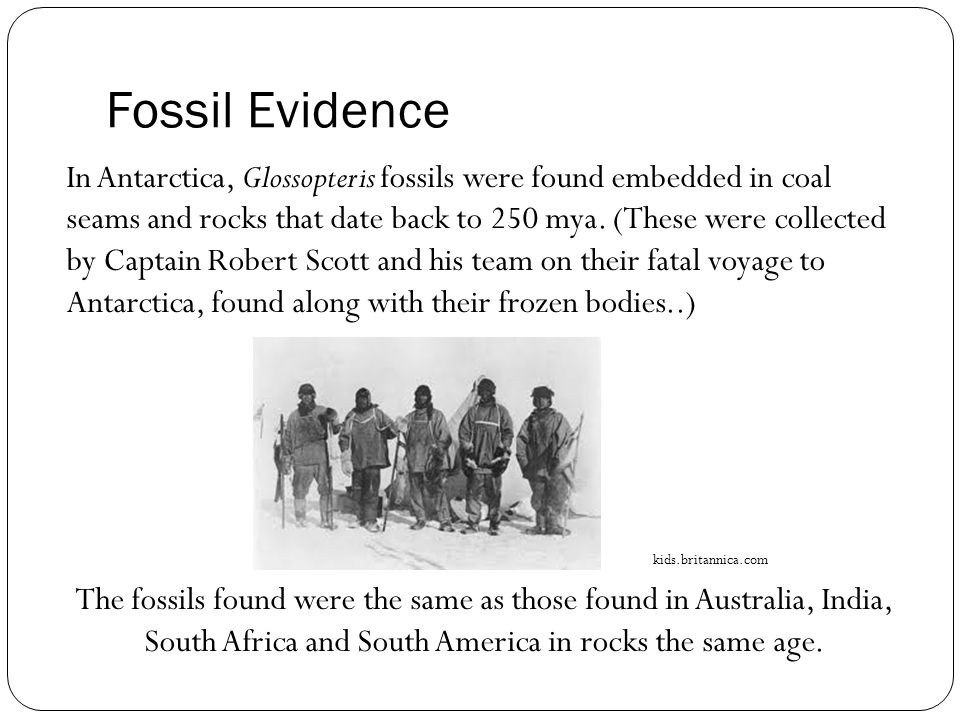 Fossil Evidence