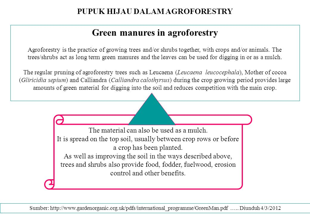PUPUK HIJAU DALAM AGROFORESTRY Green manures in agroforestry