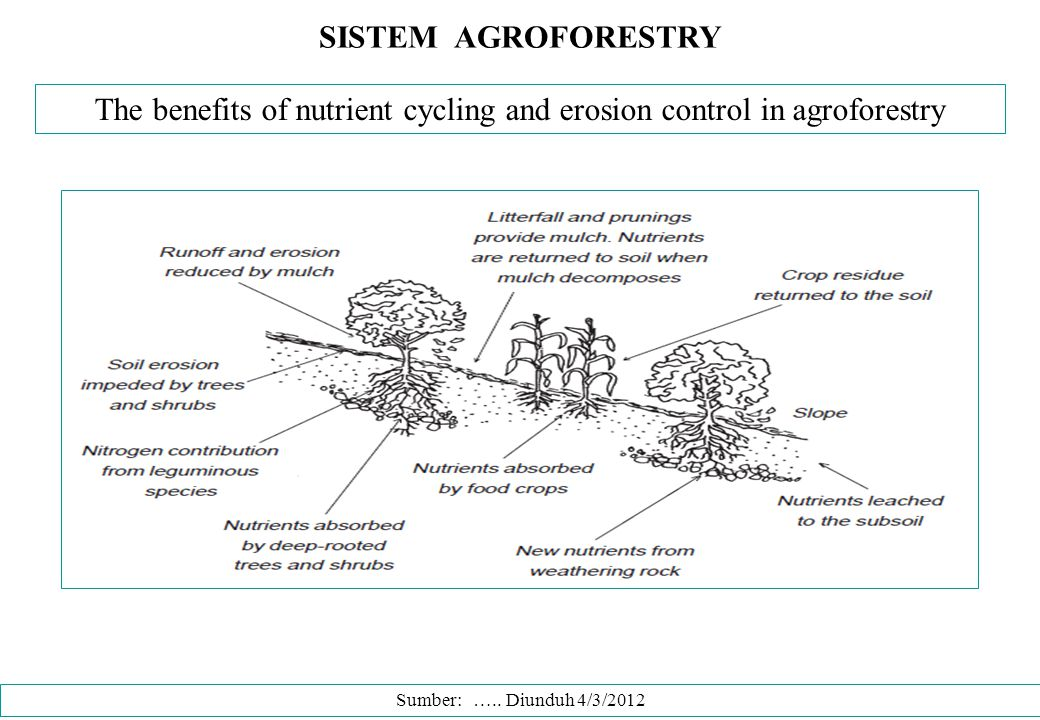 The benefits of nutrient cycling and erosion control in agroforestry