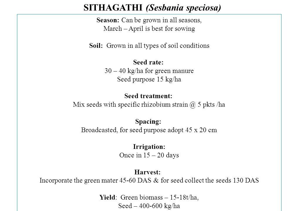 SITHAGATHI (Sesbania speciosa)