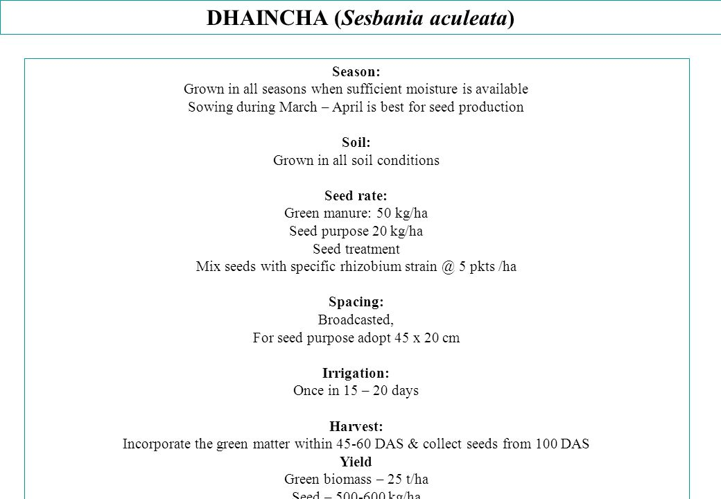 DHAINCHA (Sesbania aculeata)