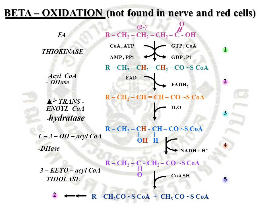 BETA – OXIDATION (not found in nerve and red cells)