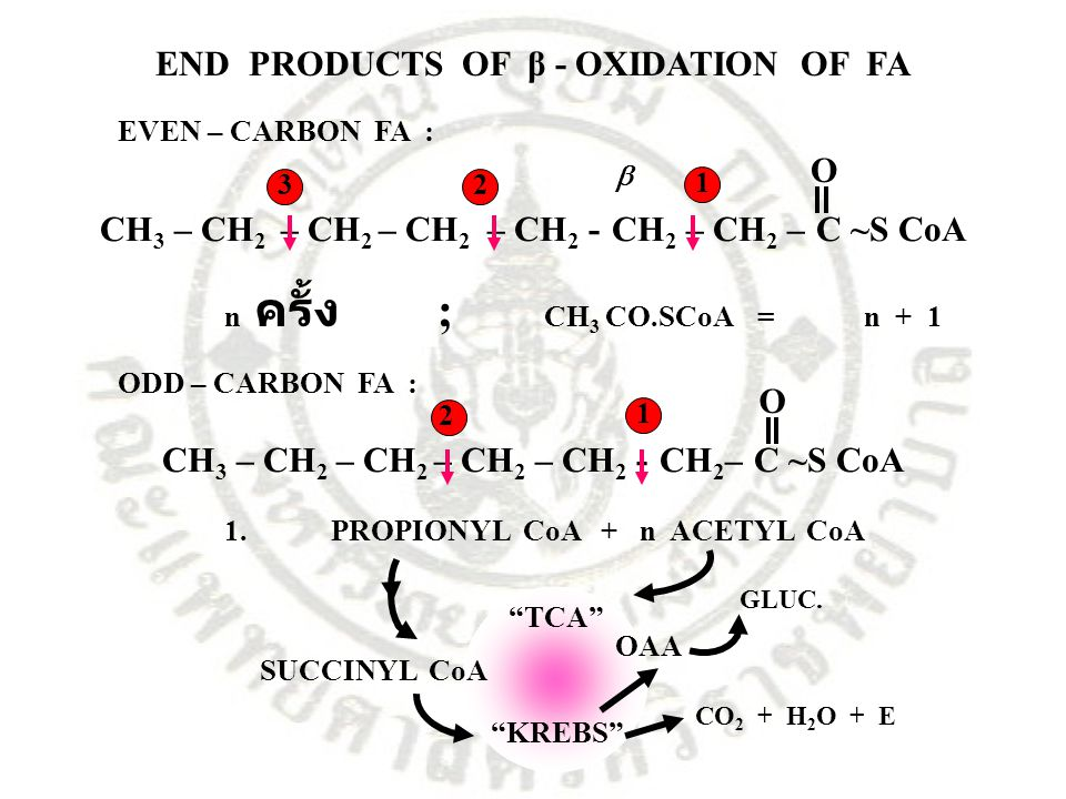 END PRODUCTS OF β - OXIDATION OF FA
