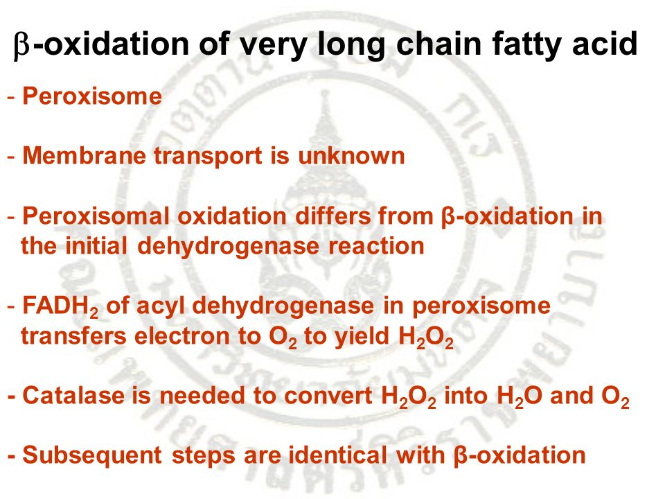 -oxidation of very long chain fatty acid