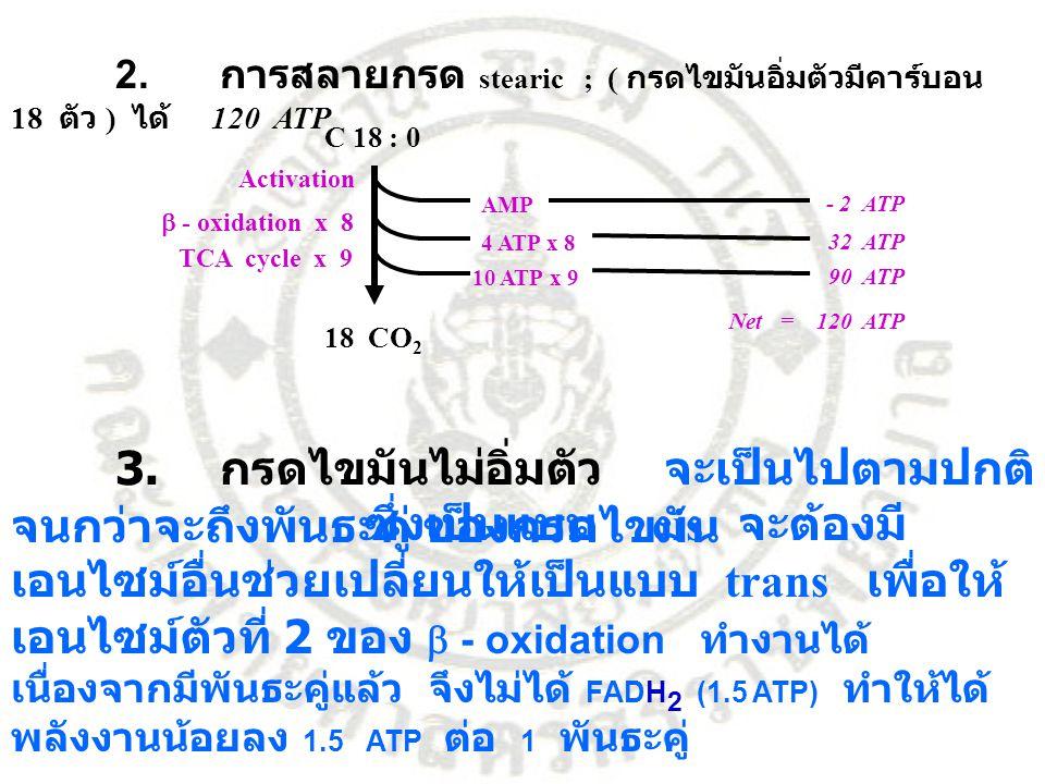 2. การสลายกรด stearic ; ( กรดไขมันอิ่มตัวมีคาร์บอน 18 ตัว ) ได้ 120 ATP
