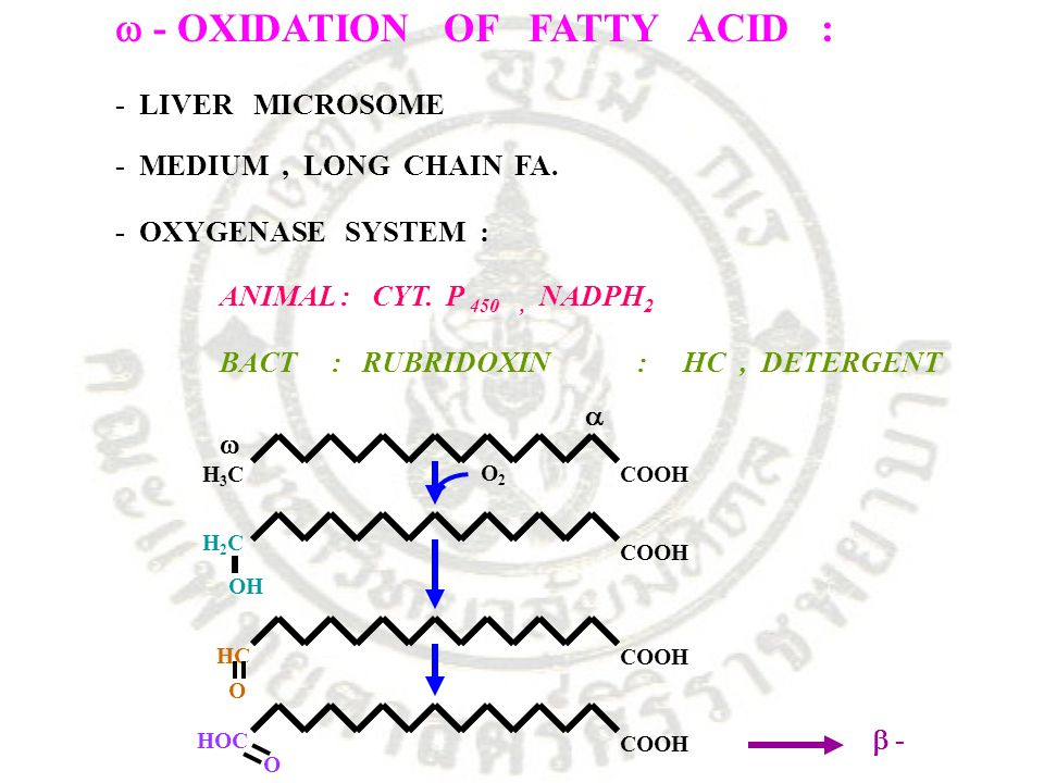  - OXIDATION OF FATTY ACID :