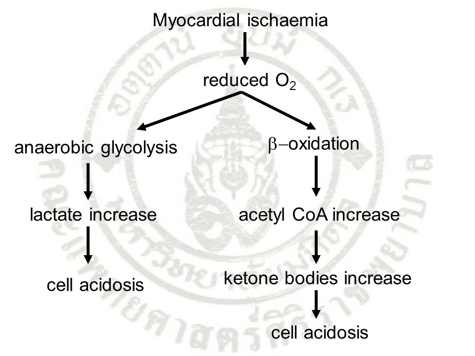 Myocardial ischaemia reduced O2. -oxidation. anaerobic glycolysis. lactate increase. acetyl CoA increase.