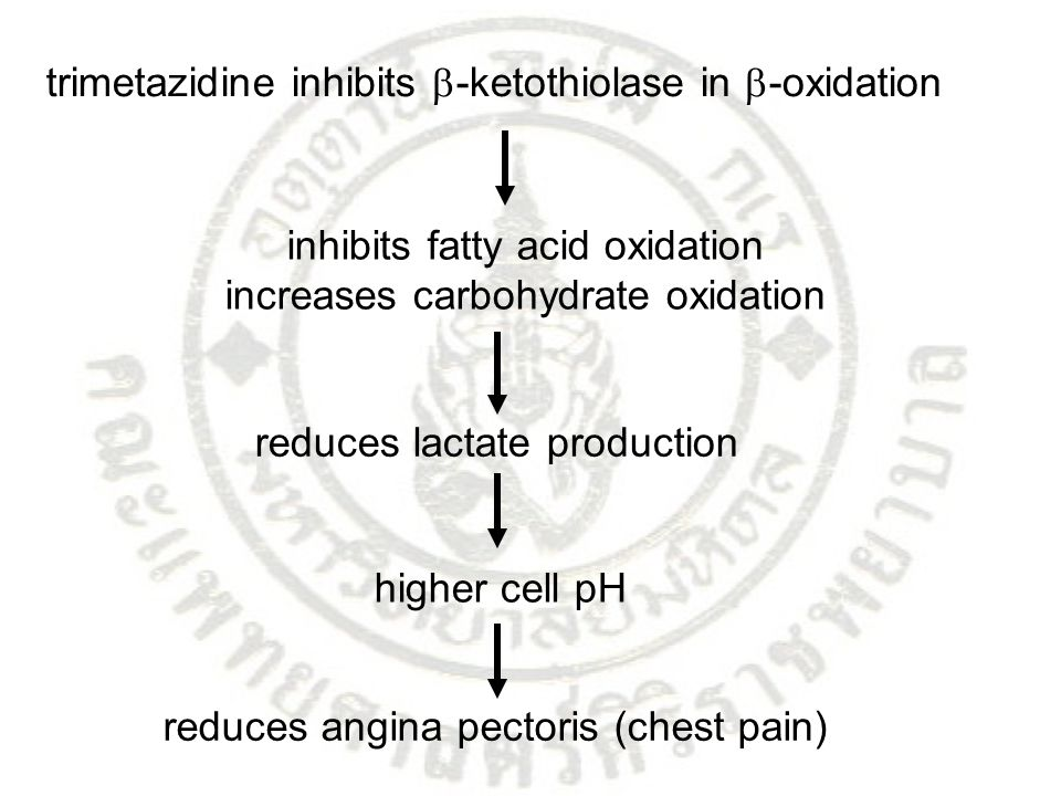trimetazidine inhibits -ketothiolase in -oxidation