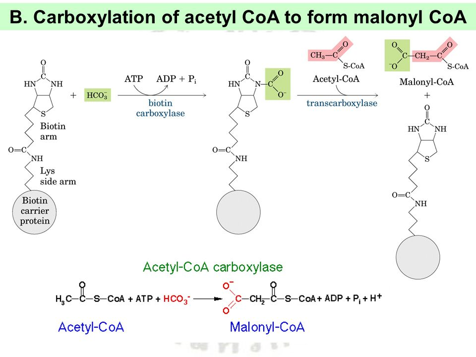 B. Carboxylation of acetyl CoA to form malonyl CoA