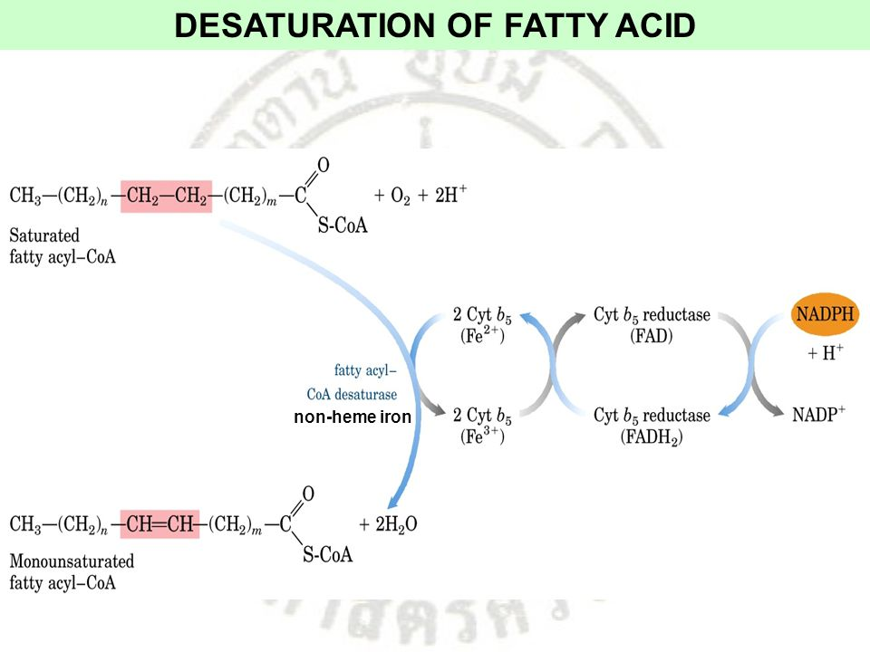 DESATURATION OF FATTY ACID