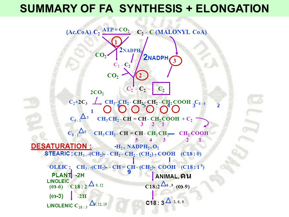 SUMMARY OF FA SYNTHESIS + ELONGATION