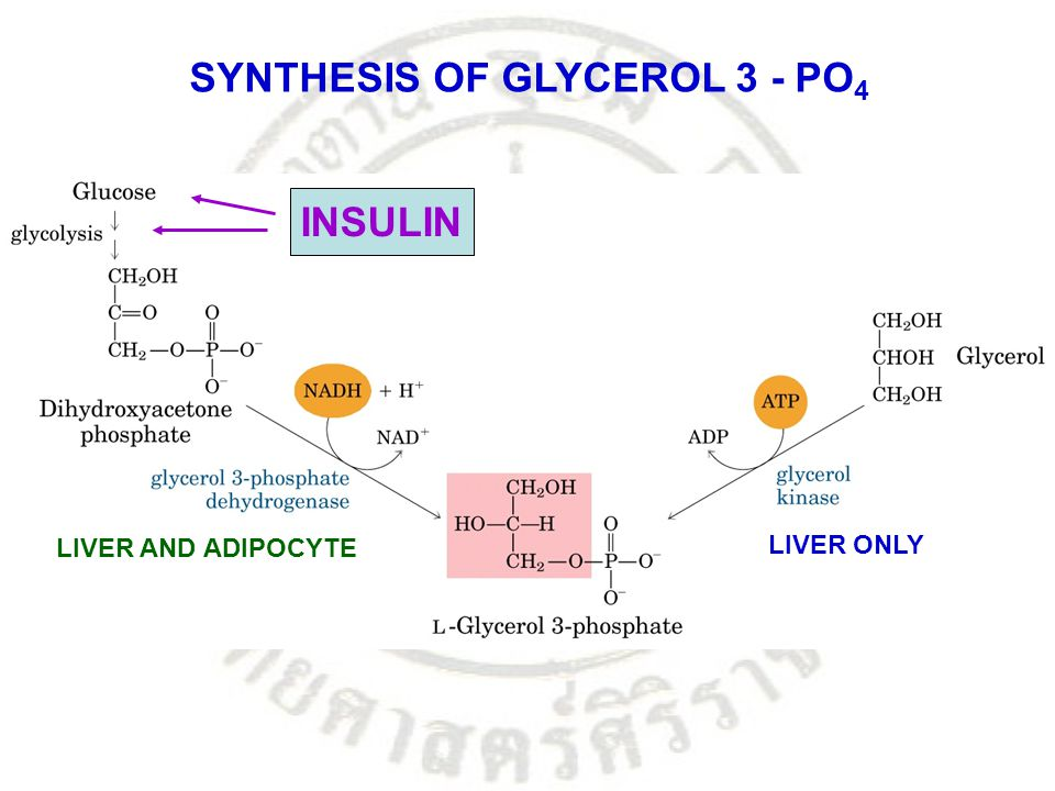 SYNTHESIS OF GLYCEROL 3 - PO4