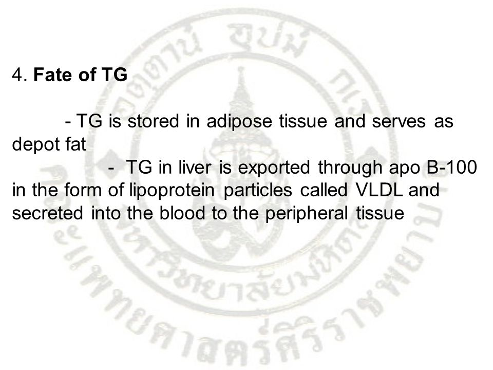 4. Fate of TG - TG is stored in adipose tissue and serves as depot fat.