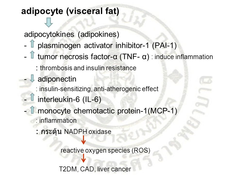 adipocyte (visceral fat) adipocytokines (adipokines)