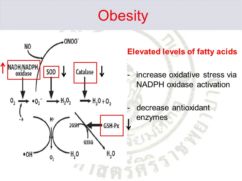Obesity Elevated levels of fatty acids