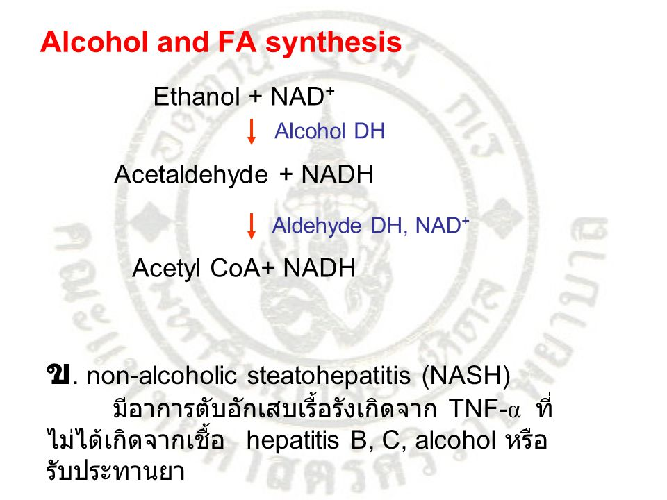 ข. non-alcoholic steatohepatitis (NASH)