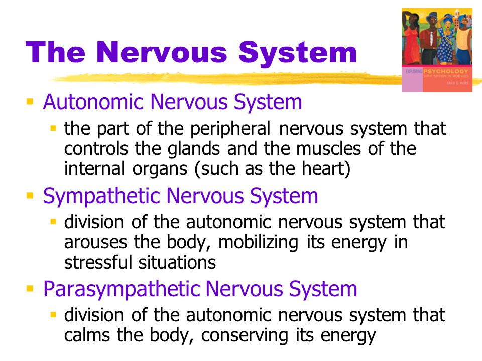 The Nervous System Autonomic Nervous System Sympathetic Nervous System