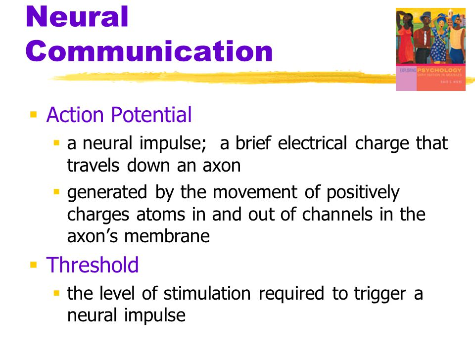 Neural Communication Action Potential Threshold