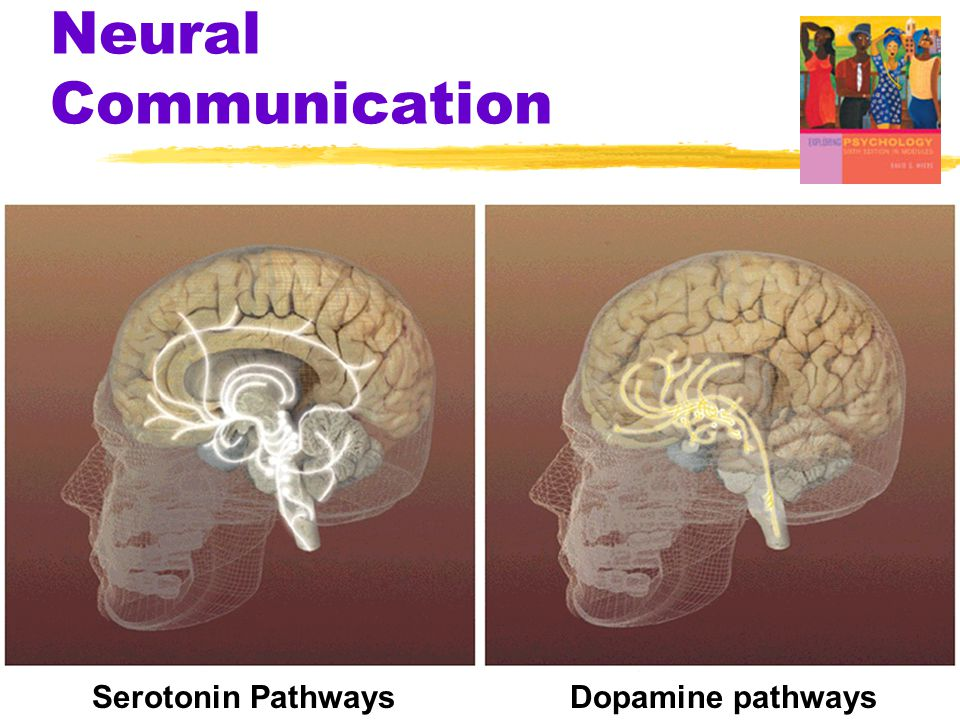 Neural Communication Dopamine pathways Serotonin Pathways