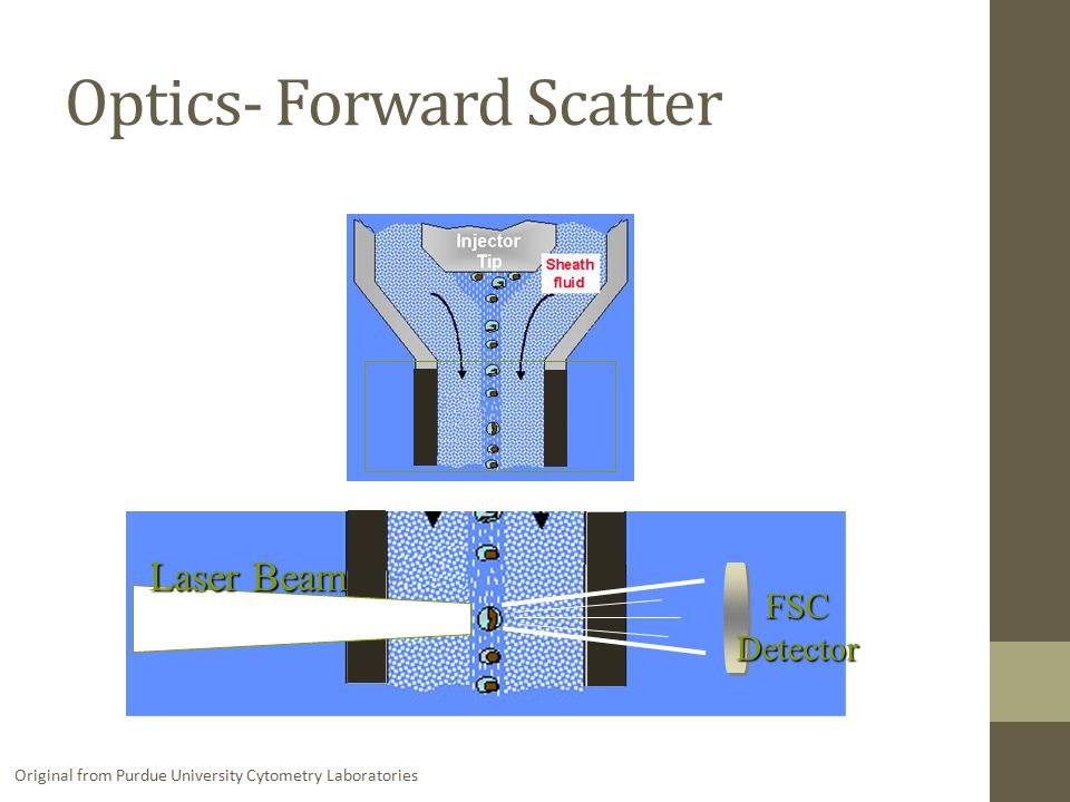 Optics- Forward Scatter