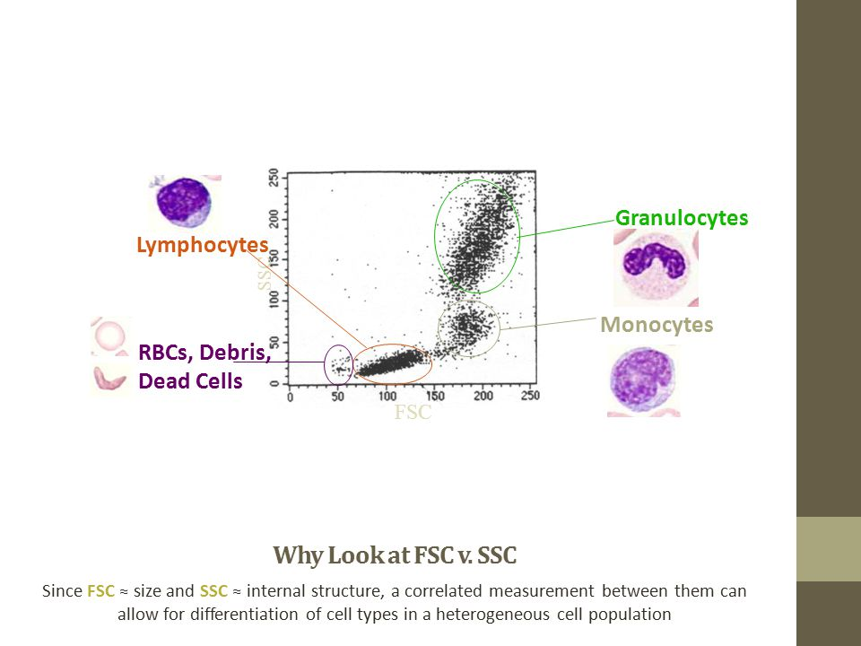 Why Look at FSC v. SSC Granulocytes Lymphocytes Monocytes