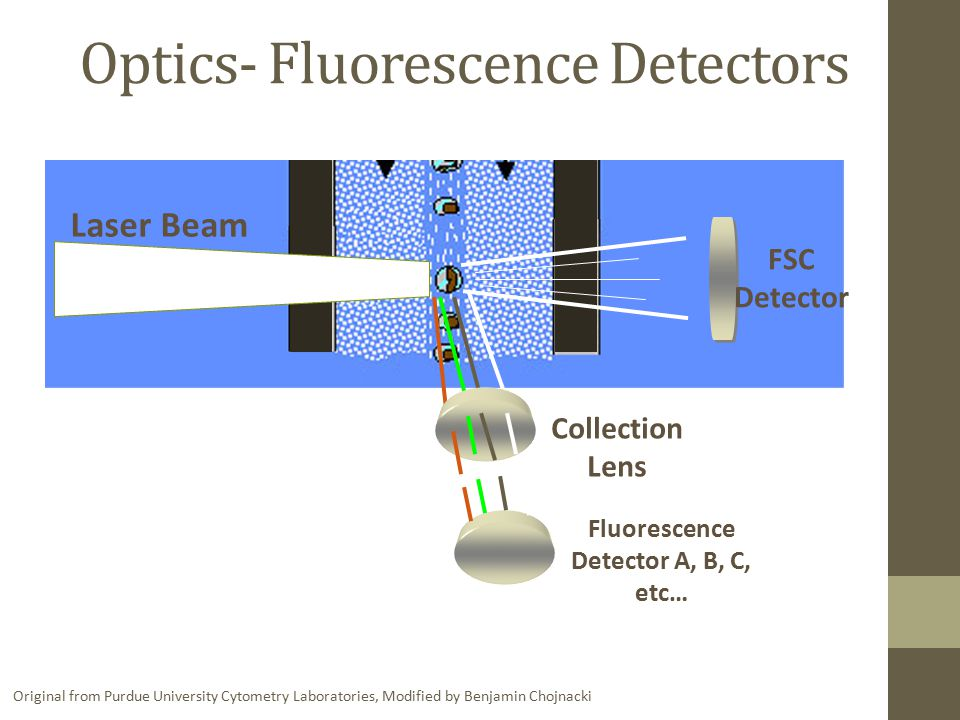 Optics- Fluorescence Detectors