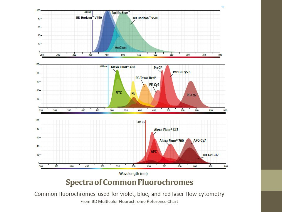 Spectra of Common Fluorochromes